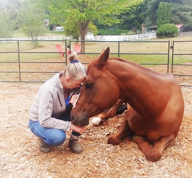 """Facilitated Equine Experiential Learning (""""FEEL"""")"""